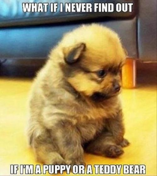 dog-humor-what-if-i-never-find-out-if-im-puppy-or-teddy-bear